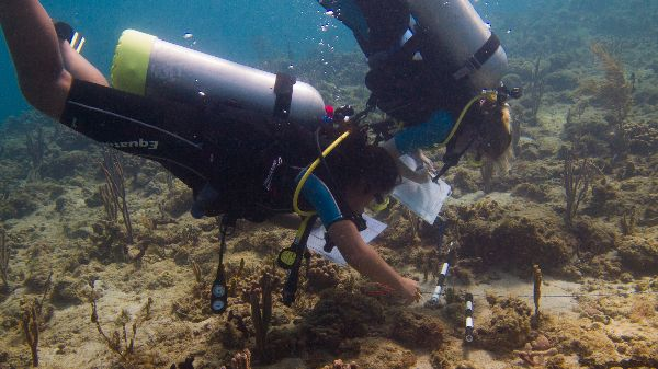 AGGRA Coral reef survey training